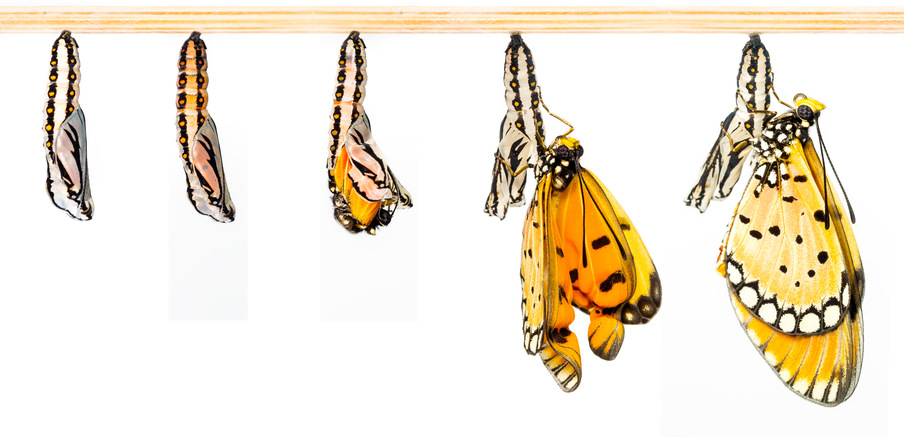 butterfly-cocoon-growth-edit
