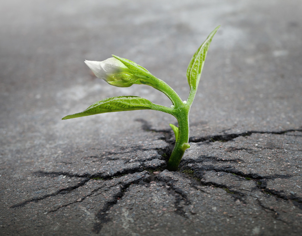 sprout-plant-pavement-edit2